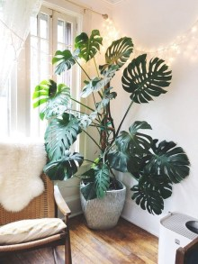 Affordable House Plants For Living Room Decoration 14