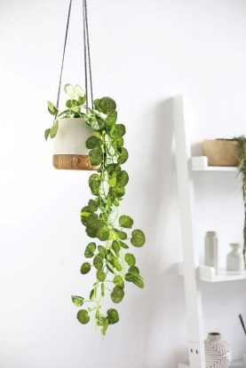 Affordable House Plants For Living Room Decoration 15