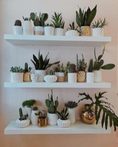 Affordable House Plants For Living Room Decoration 22