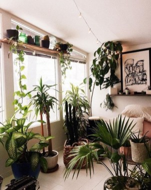 Affordable House Plants For Living Room Decoration 27