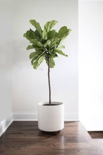Affordable House Plants For Living Room Decoration 31