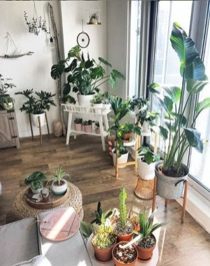 Affordable House Plants For Living Room Decoration 34
