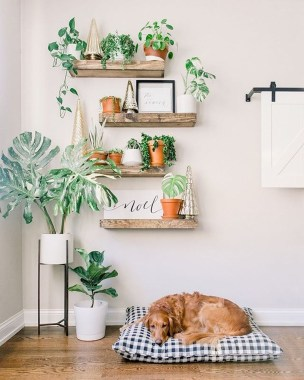 Affordable House Plants For Living Room Decoration 35