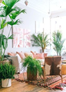 Affordable House Plants For Living Room Decoration 39