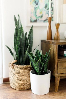 Affordable House Plants For Living Room Decoration 43