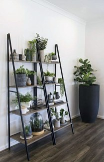 Affordable House Plants For Living Room Decoration 48