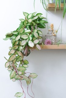 Affordable House Plants For Living Room Decoration 50