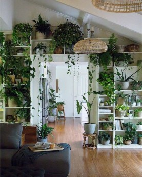 Pretty House Plants Ideas For Living Room Decoration 43