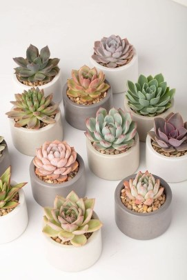 Awesome Succulent Garden Ideas In Your Backyard 08