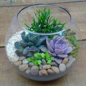 Awesome Succulent Garden Ideas In Your Backyard 21