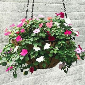 Lovely Hanging Flower To Beautify Your Small Garden In Summer 01