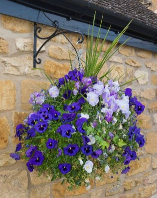 Lovely Hanging Flower To Beautify Your Small Garden In Summer 24
