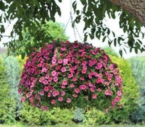 Lovely Hanging Flower To Beautify Your Small Garden In Summer 28