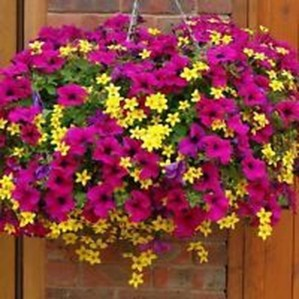 Lovely Hanging Flower To Beautify Your Small Garden In Summer 29