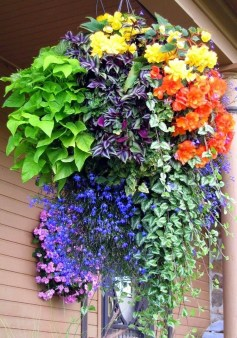 Lovely Hanging Flower To Beautify Your Small Garden In Summer 33