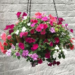 Lovely Hanging Flower To Beautify Your Small Garden In Summer 40