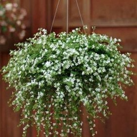 Lovely Hanging Flower To Beautify Your Small Garden In Summer 49