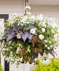 Lovely Hanging Flower To Beautify Your Small Garden In Summer 53
