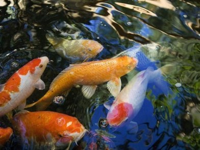 Adorable Fish Ponds Inspirations For Your Home 36