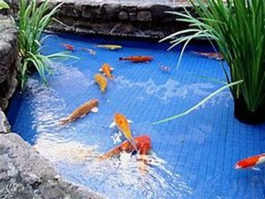 Adorable Fish Ponds Inspirations For Your Home 38