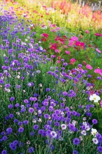 Stunning Spring Flower Garden Ideas With Perfect Lighting To Increase Your Design 05