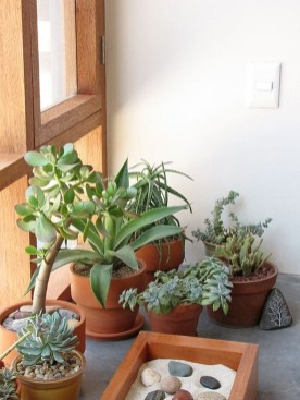 Elegant Indoor Rock Garden Ideas That Can Enhance Your Home Style 09