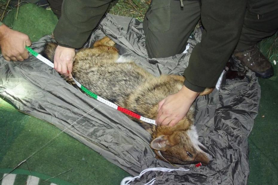 vir: http://www.lovska-zveza.si