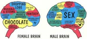 mens-and-womens-brains
