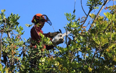 Tree Service - tree triming company