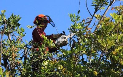Tree Service - tree triming company