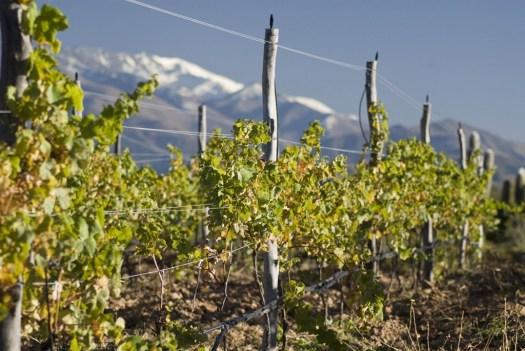 Colomé 1831 een sublieme wijn