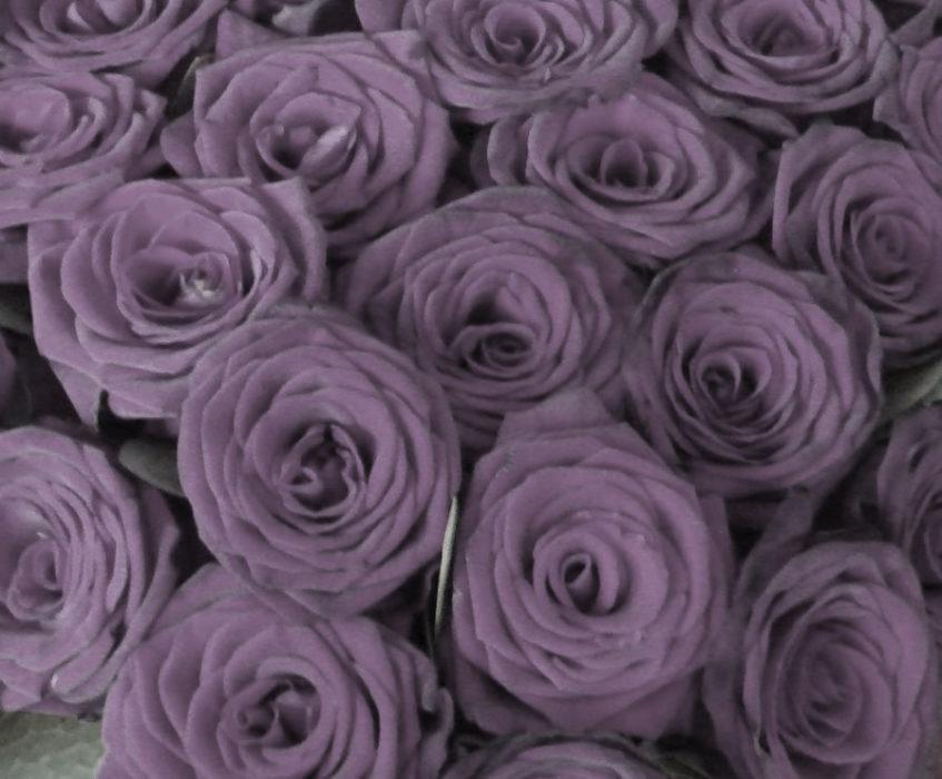 rozen website