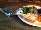 A certain feathery someone embarks on a delicious round of Thanksgiving day plate-surfing...