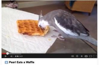 Pearl Eats a Waffle