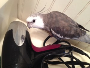 Yup. I was right the first time. The prettiest cockatiel in the whole world - living right inside this interesting shiny device!!
