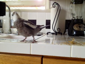 My feathery humanitarian - Mommy is so proud of him!!