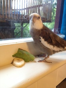 Banana and beet greens. It appears they are trying to take over my ledge. I will show them who is boss.