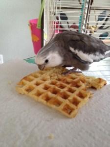 Waffle. My waffle. MY waffle, Mom. MINE.