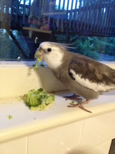 "Now I'll display my ""broccoli beak."" Yup - she's putting the broccoli back in the frig (to save later for me since I like it so much). Whew."