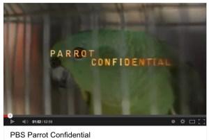 ParrotConfidentialPBS