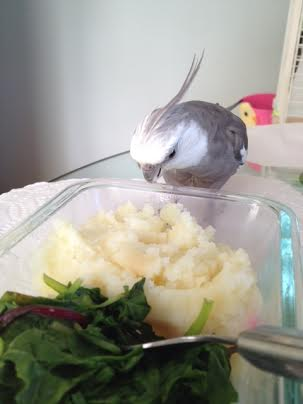 Oh boy! Mashed potatoes - yum!