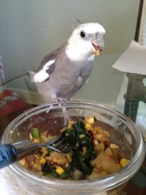 """A final surefire method of """"portion control"""" is to put one foot on the dish while chewing and flinging morsels."""