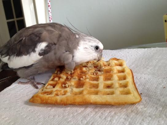 MY waffle, Mom. MINE.