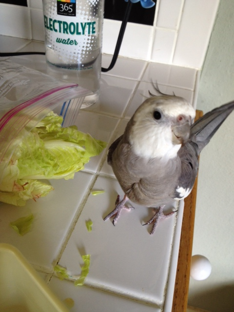 Where is my large featherless assistant when I need her? I have an urgent report to make!