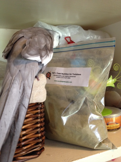 """I'll just start by pointing out the intruder's things - like this bag labeled """"Tortoise Nutrition."""""""