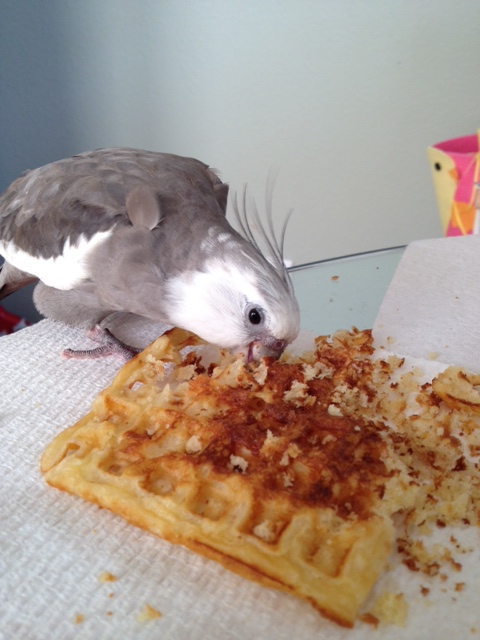 """But first, the (very photogenic) """"Waffle Terminator"""" pauses for a photo op - his fans deserve it."""