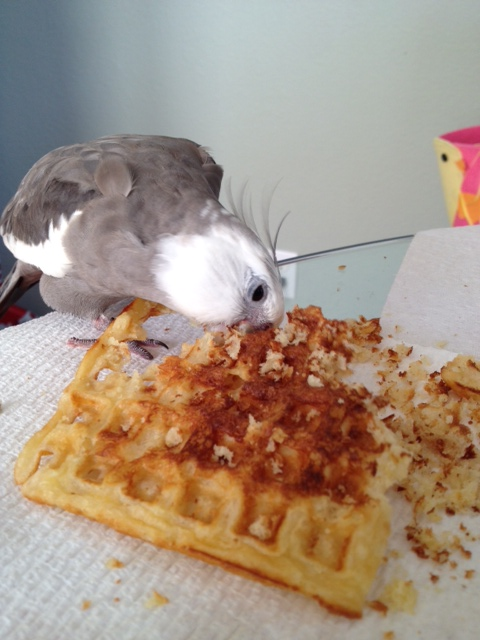 """When he is finished, there will be no trace of the species once known as """"the waffle."""""""