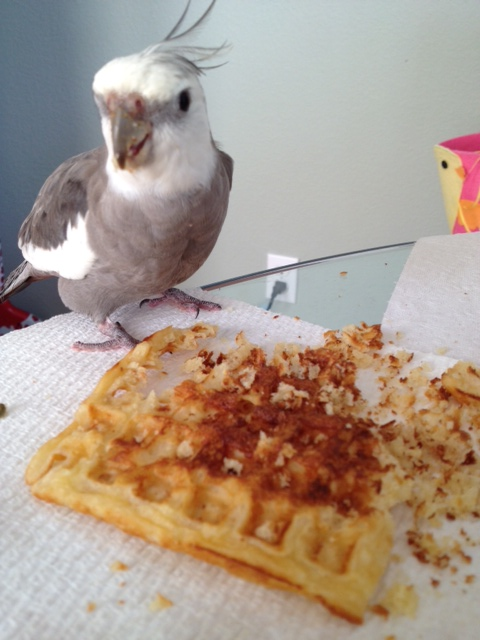 """Concluding the waffle is totally terminated, the """"Waffle Terminator"""" prepares to go back to the future, carrying evidence of mission completion deep within him."""