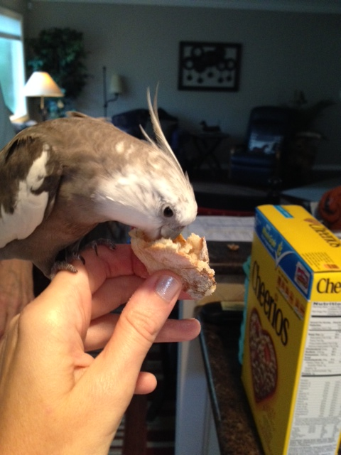 """First I will perform my patented """"full beak immersion"""" test."""