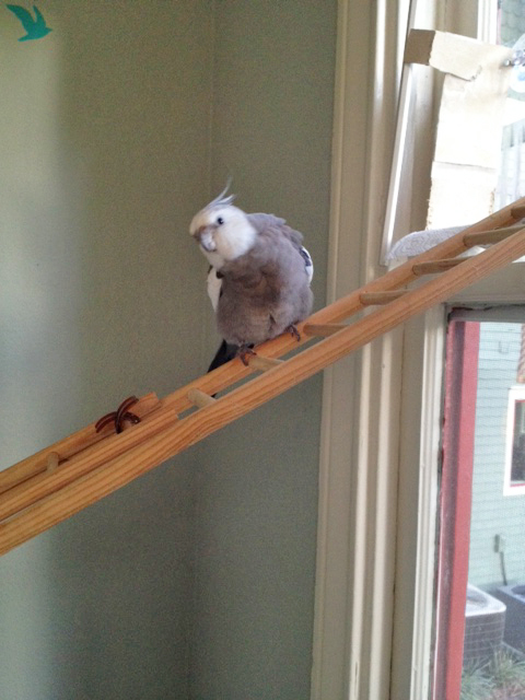 "Okay, Mom, it's almost time for the next ""aerial nest twirling"" show. Get the camera ready!"